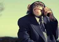 Monkey in thePetshop